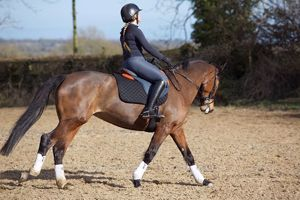 Picture of Dressage - Performance
